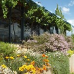 Kalari Winery